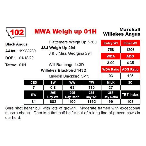 MWA Weigh up 01H