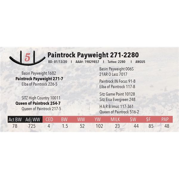Paintrock Payweight 271-2280