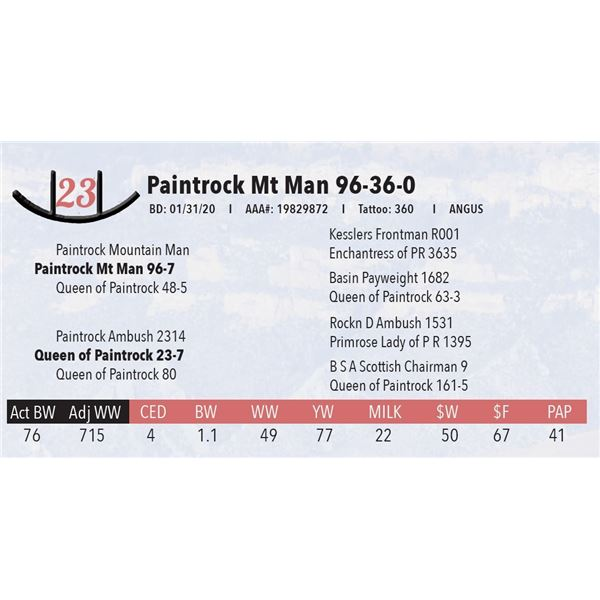 Paintrock Mt Man 96-36-0