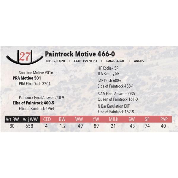 Paintrock Motive 466-0