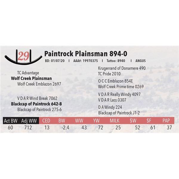 Paintrock Plainsman 894-0