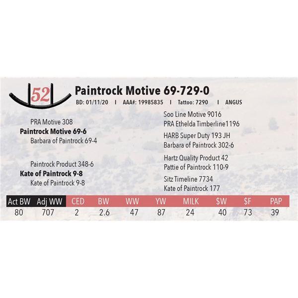 Paintrock Motive 69-729-0