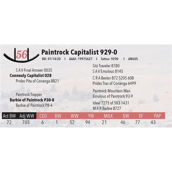 Paintrock Capitalist 929-0