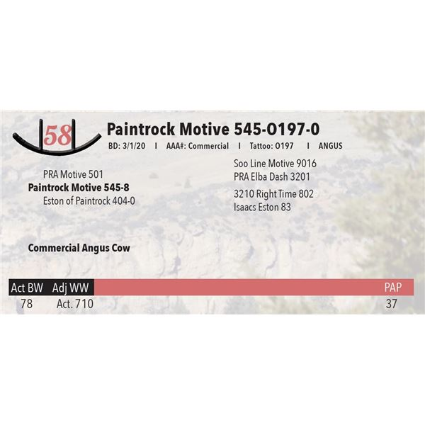 Paintrock Motvie 545-O197-0