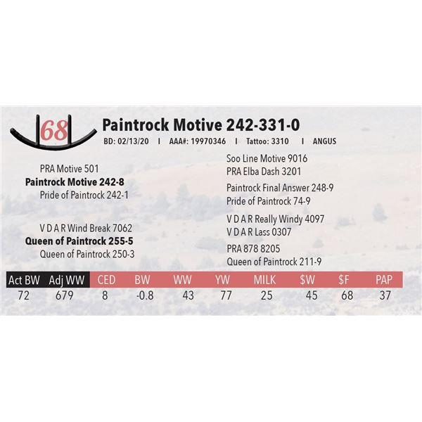 Paintrock Motive 242-331-0