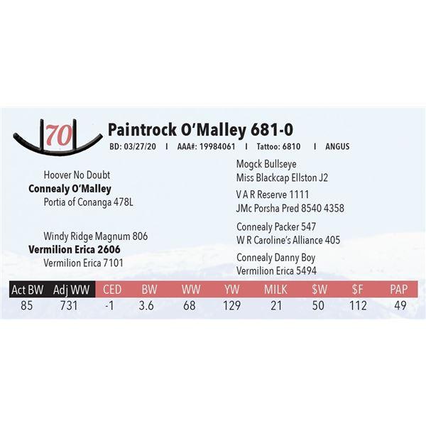 Paintrock O'Malley 681-0