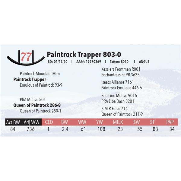 Paintrock Trapper 803-0