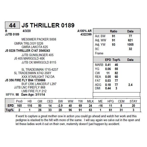 J5 THRILLER 0189