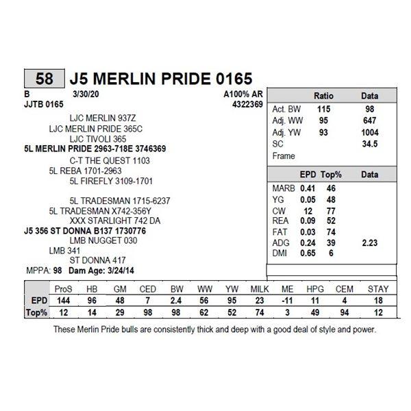 J5 MERLIN PRIDE 0165