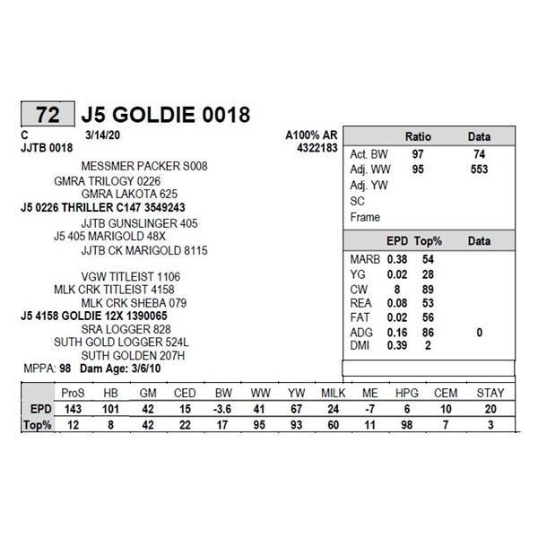 J5 GOLDIE 0018