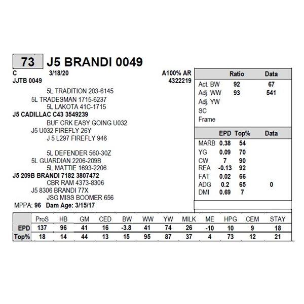 J5 BRANDI 0049