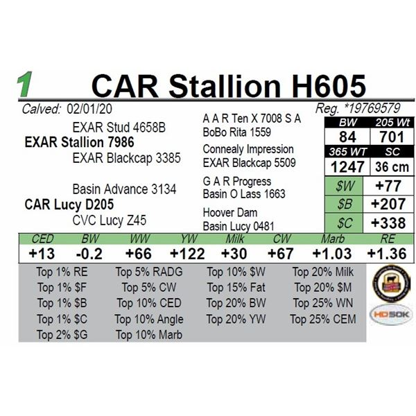 CAR Stallion H605