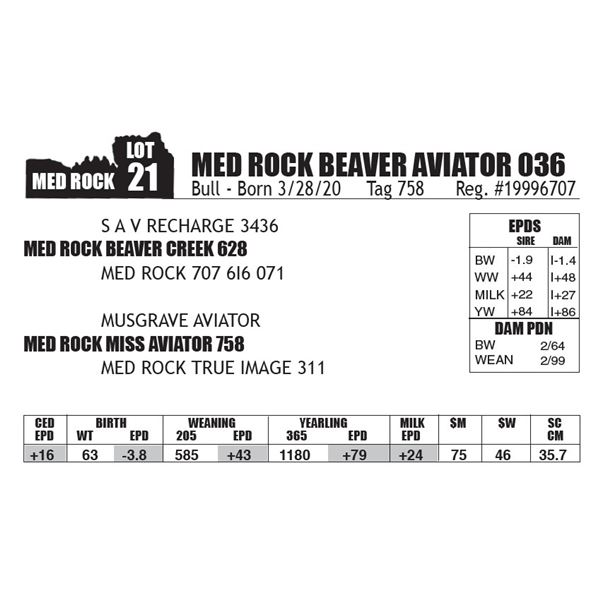 MED ROCK BEAVER AVIATOR 036