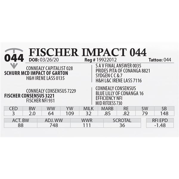 OUT OF SALE - FISCHER IMPACT 044