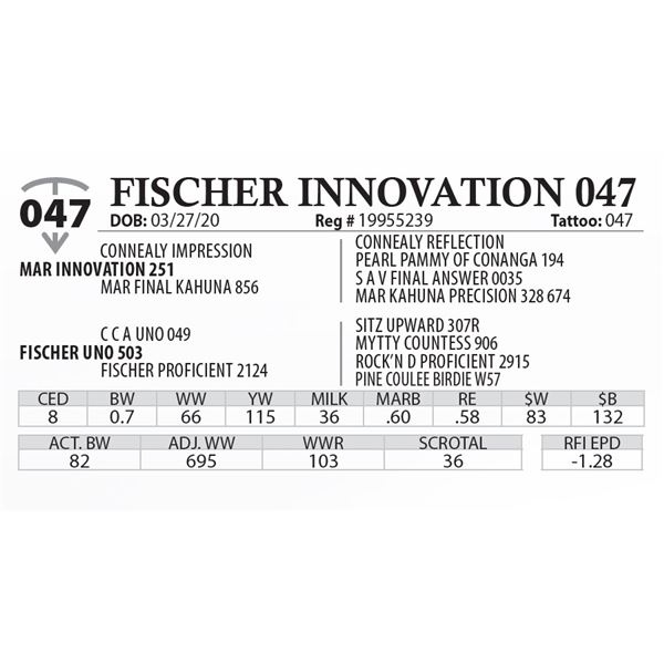 FISCHER INNOVATION 047