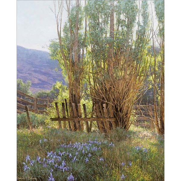 Dennis Doheny -Wild Iris