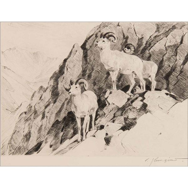Carl Rungius -Dall Sheep