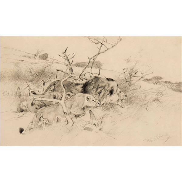 Wilhelm Kuhnert -Crouching Lion & Lioness