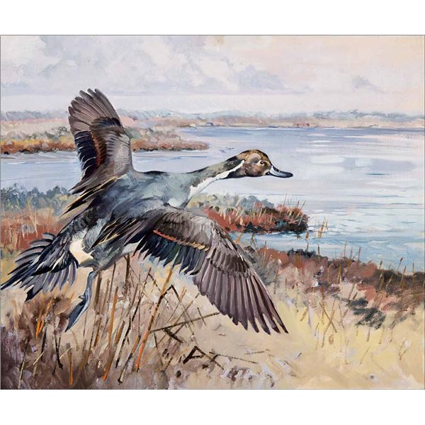 George Browne -Pintail Going Out