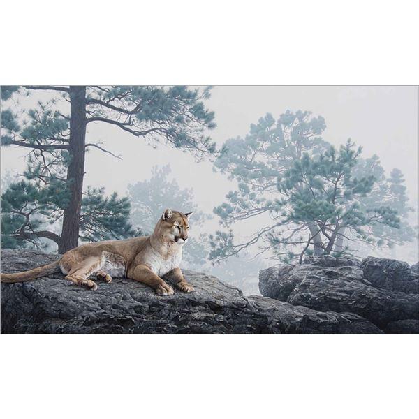 Daniel Smith -Mountain Lion in the Mist