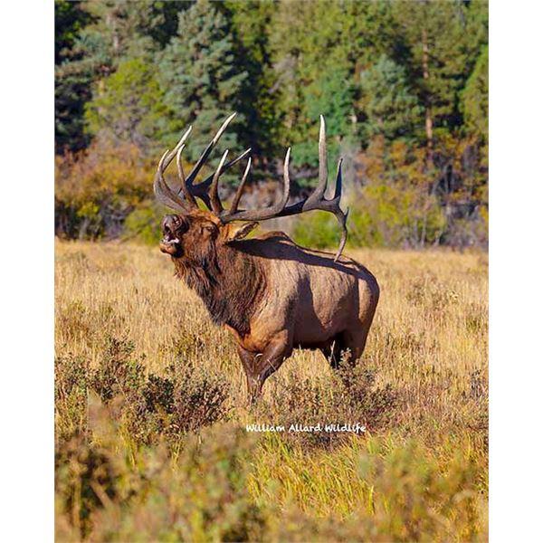 Utah Bull Elk - Southwest Desert, South - Muzzleloader - Conservation Permit