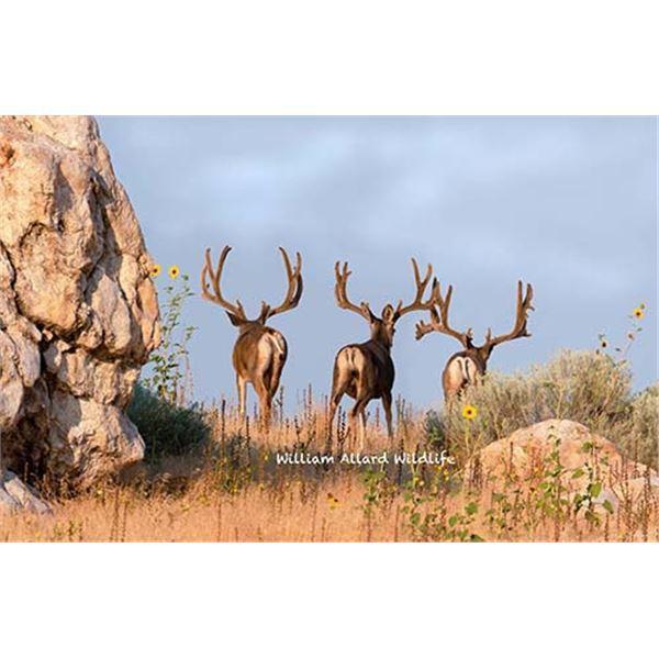 Utah Buck Deer - West Desert, Vernon - Muzzleloader - Conservation Permit