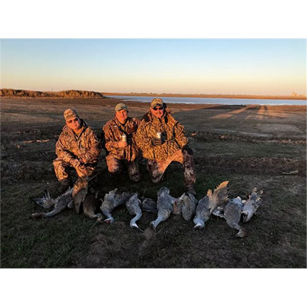 Texas Panhandle Sand Hill Crane hunt for 2 over 3 days