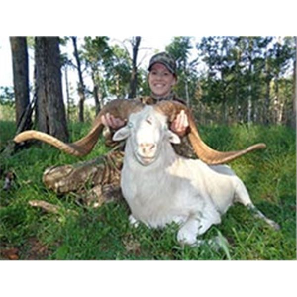 3 Day Texas Dall Sheep or Blackbuck Hunt on Private Texas Ranch