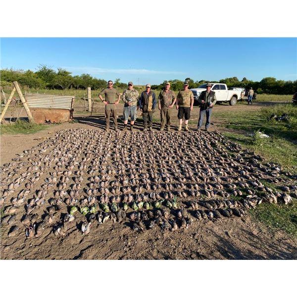 Dove Hunt in Argentina - MG Hunting