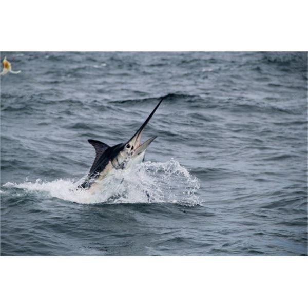 Sport Fishing Trip in Panama - Hooked on Panama