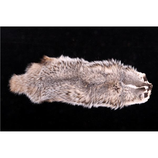 Montana Taxidermy American Badger Hide