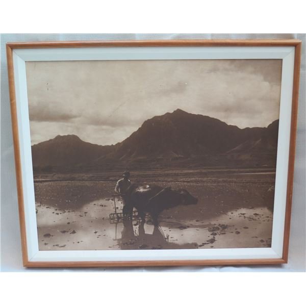 "Black & White Water Buffalo Print Matted in Wooden Frame 31""x26"""