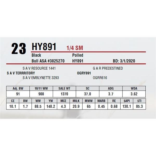 HY891