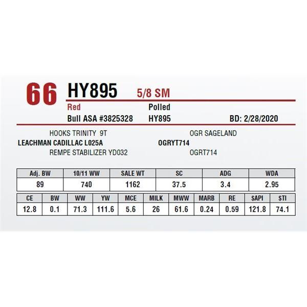 HY895