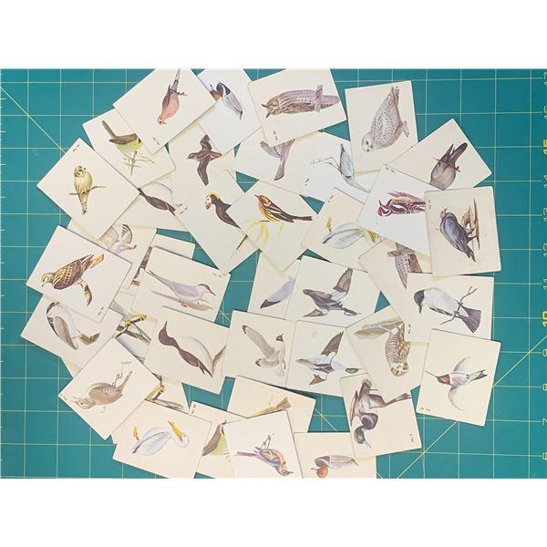 LOT OF VINTAGE PARKHURST BIRD IDENTIFICATION CARDS