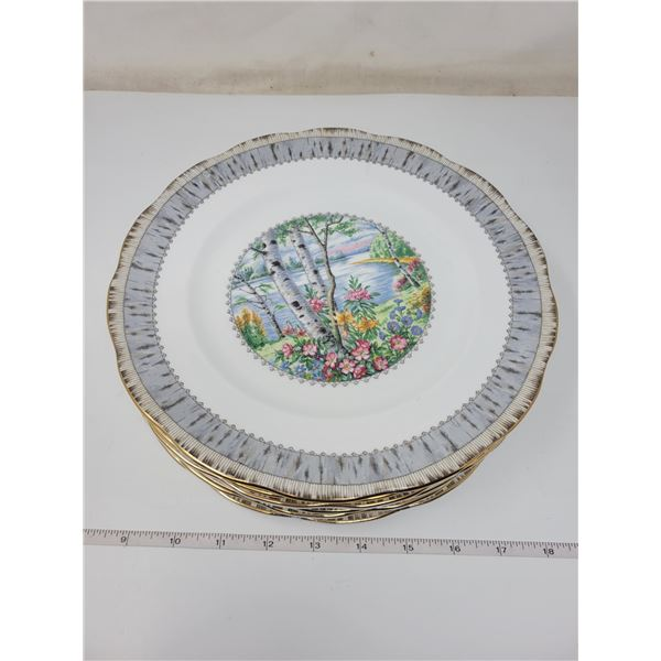 6 Royal Albert dinner plates (silver birch)