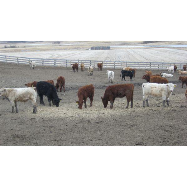 Brassington Farms - 600# Mixed - 131 Head (Paradise Valley, AB)