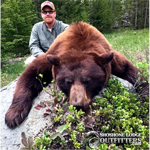 Shoshone Lodge Outfitters 5 day Black Bear hunt for 1 hunter in Wyoming