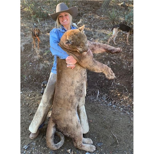 Dieringer Outfitters 5 day Mtn Lion hunt for 1 hunter, Arizona.