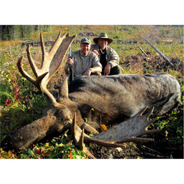 Omineca Guides Canada Moose hunt for 1 hunter in British Columbia