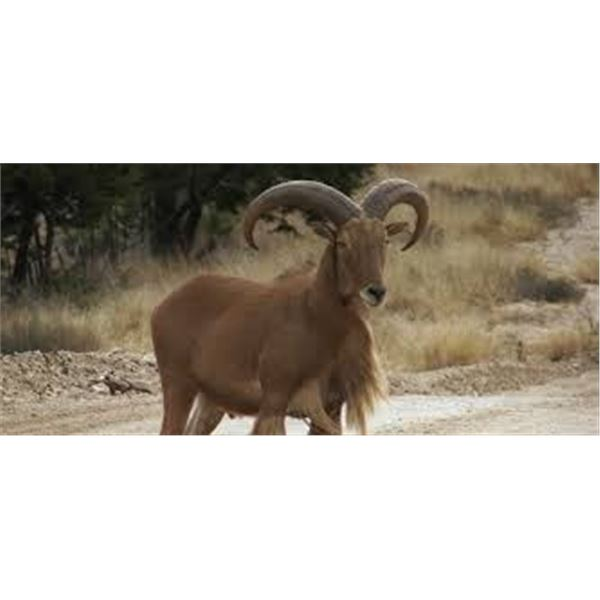 Choice of Aoudad or Axis Deer hunt and Alligator Gar Fishing, Texas, for 1 Hunter and 1 Observer