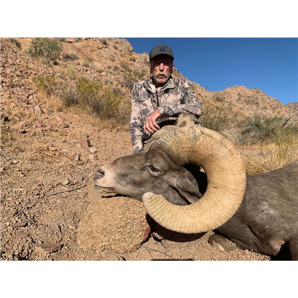 California State Governor's Permit for Desert Bighorn in the Cady Mountains Unit.