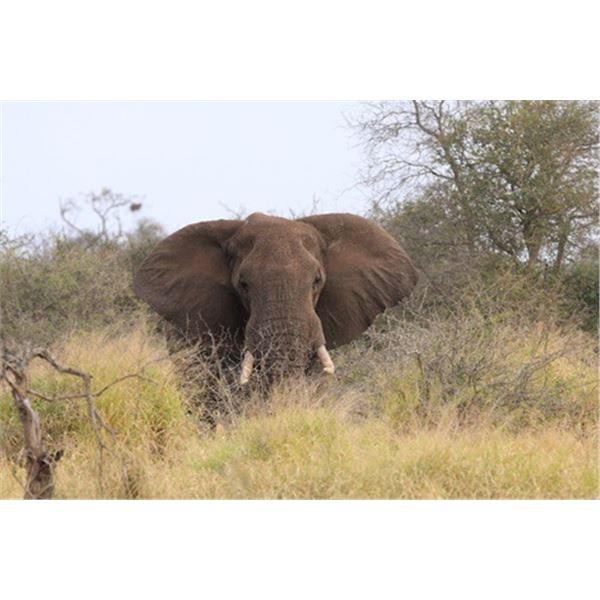 Zululand Photo Safari