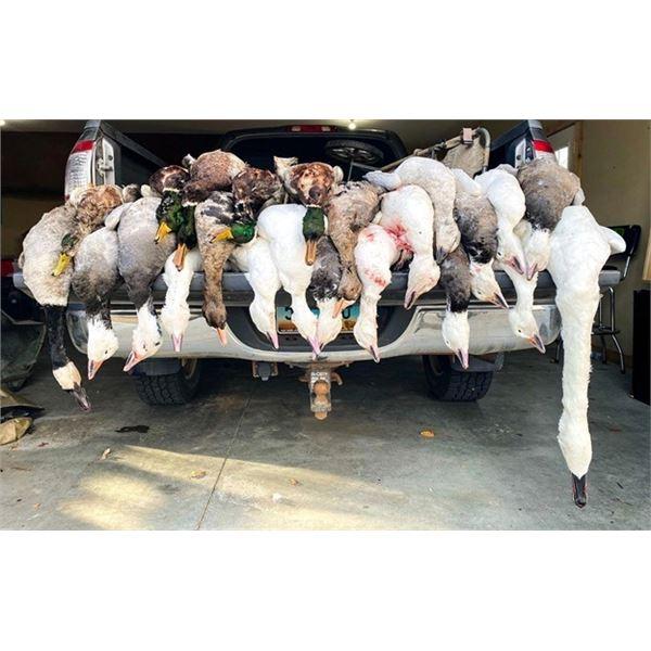 North Dakota Ducks and Geese