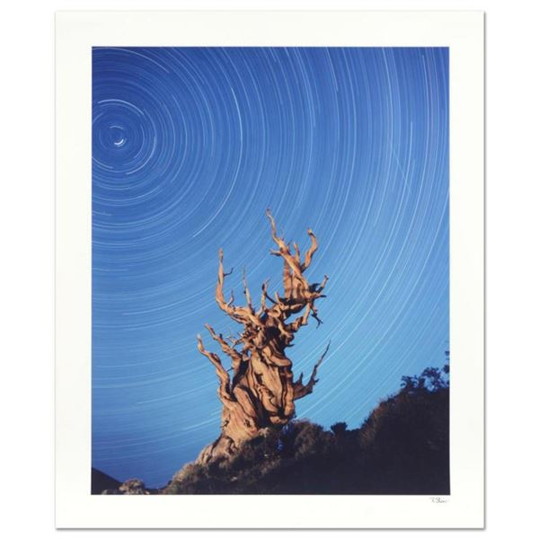 "Robert Sheer, ""Yoda Tree"" Limited Edition Single Exposure Photograph, Numbered and Hand Signed with"