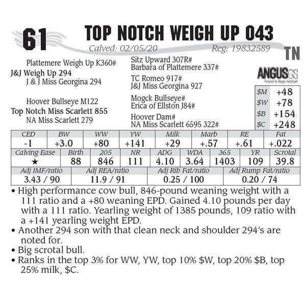 Top Notch Weigh Up 043
