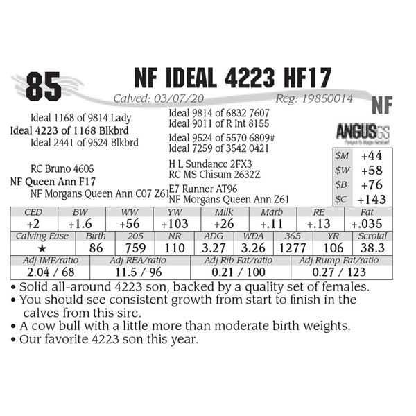 NF Ideal 4223 HF17
