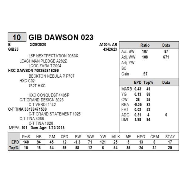 GIB DAWSON 023