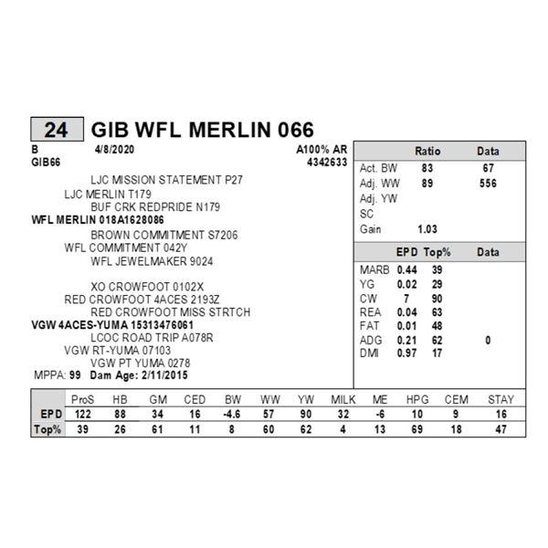 GIB WFL MERLIN 066