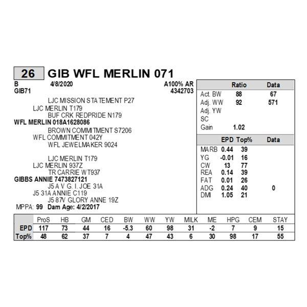 GIB WFL MERLIN 071